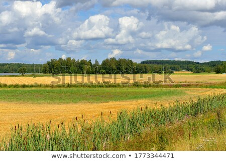 Crop field in Finland Stock photo © Mps197