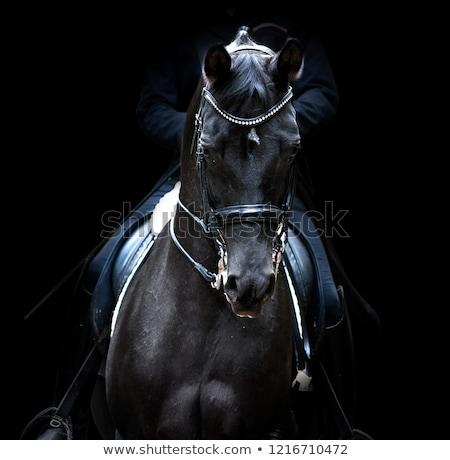 caballo · mujeres · formación · negro · equitación · nina - foto stock © smuki