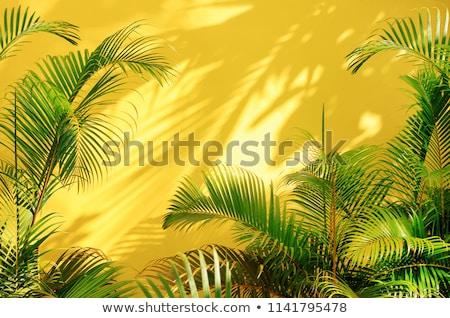 tropicales · palma · isla · océano · puesta · de · sol · aislado - foto stock © -baks-