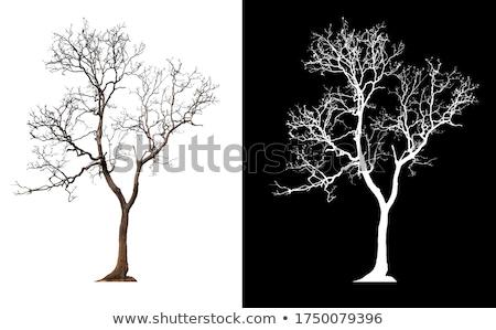 huş · ağacı · kapalı · ağaçlar · kış · manzara · gökyüzü - stok fotoğraf © kotenko