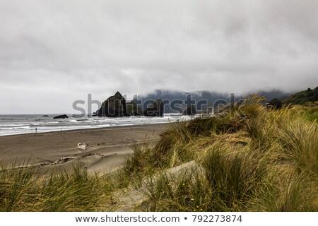 tengerpart · fű · Oregon · homok · domb · fedett - stock fotó © ravensfoot