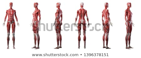 筋肉の · 男 · 地上 · 3dのレンダリング · 実例 · スポーツ - ストックフォト © maya2008