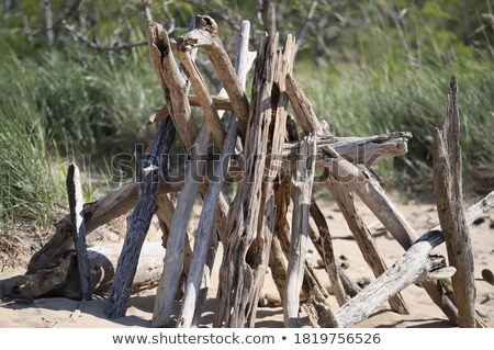 Driftwood TeePees Stock photo © lovleah