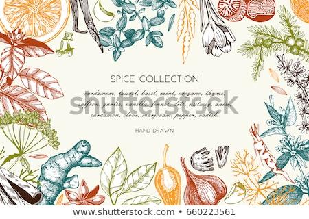大根 ハーブ 木材 サラダ 食べ 新鮮な ストックフォト © M-studio