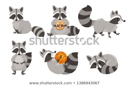 Cartoon wasbeer lopen illustratie gelukkig Stockfoto © cthoman