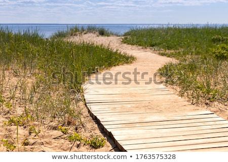 болото · природы · тропе · пути · рано - Сток-фото © 5xinc