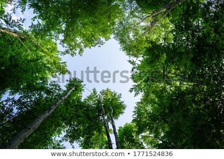 Vergine foresta panorama mattina natura Foto d'archivio © bbbar
