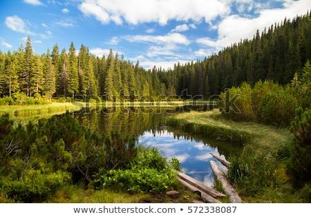 альпийский · ручей · лет · день · парка · Канада - Сток-фото © wildnerdpix