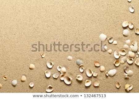 Tengerparti homok kagylók izolált fehér nyár utazás Stock fotó © ivonnewierink