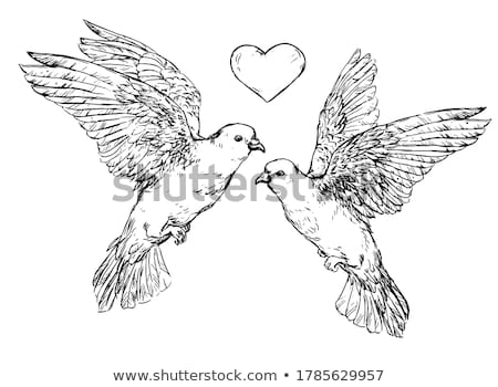 wedding couple with dove in hand stock photo © kzenon