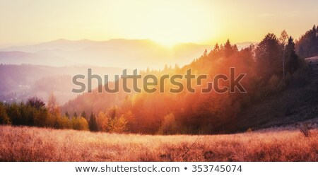 Tree on a green meadow with a path at sunset Stock photo © Zerbor