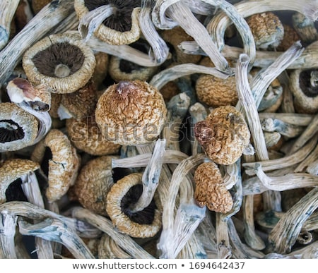 champignons · studio · panier · isolé · blanche · inférieur - photo stock © digifoodstock