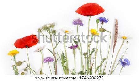 Buquê flores silvestres pote velho tabela naturalismo Foto stock © Yatsenko