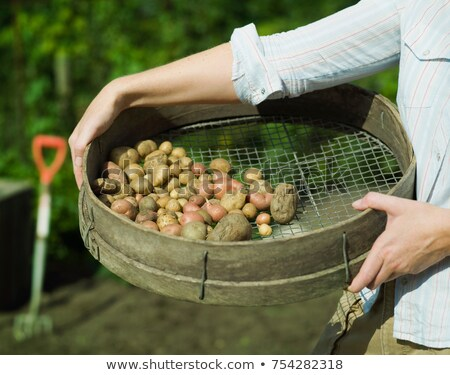 A garden sieve filled with potatoes Stock photo © IS2