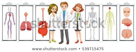 Three doctors and different human system diagrams Stock photo © colematt
