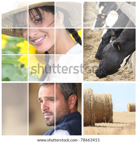 Mosaic of people in the countryside Stock photo © photography33