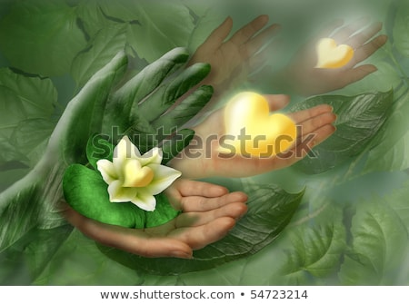 Still-life with hands, leaf and flower as heart Stock photo © boroda