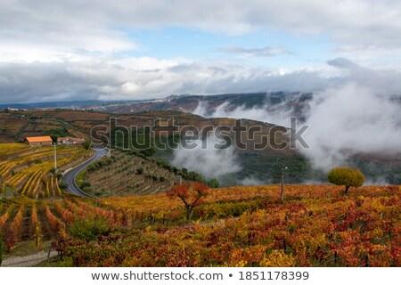 Stok fotoğraf: Bağ · sonbahar · Portekiz · gökyüzü · manzara · meyve