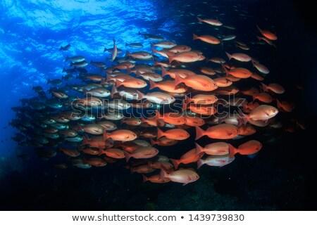 école faible rechercher couvrir plongée Belize Photo stock © MojoJojoFoto