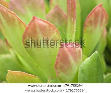 Sivatag növényvilág zöld homok USA Stock fotó © emattil