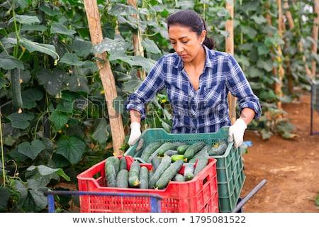 Freshly picked Vegetables  Stock photo © tab62