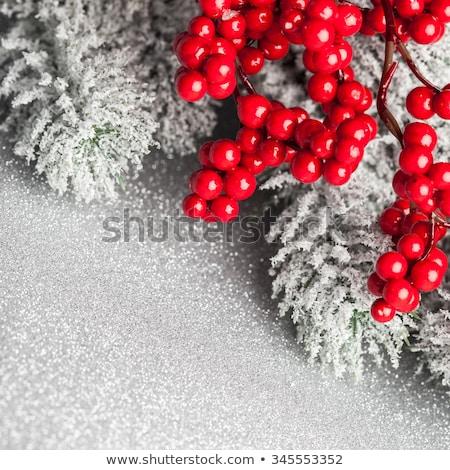 Christmas takje Rood bessen winter Stockfoto © stevanovicigor