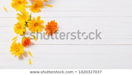 Zdjęcia stock: Calendula Flowers Background