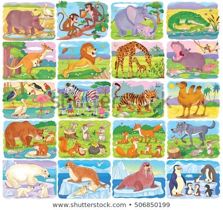 Szett különböző vadállatok illusztráció háttér művészet Stock fotó © bluering