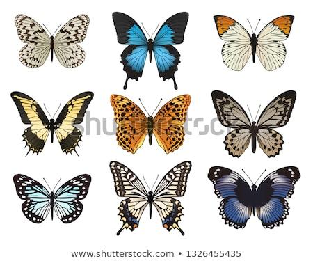 синий · бабочка · изолированный · белый · весны · свет - Сток-фото © blackmoon979