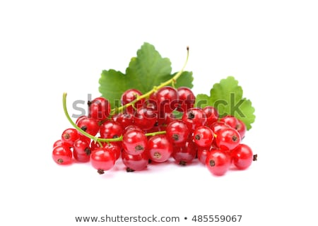 redcurrant isolated on white Stock photo © M-studio
