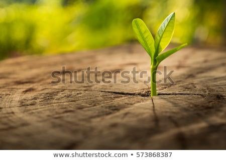 the spring tree grows Stock photo © romvo