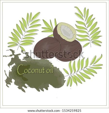 Vetor verão ilustração tropical folhas de palmeira transparente Foto stock © articular