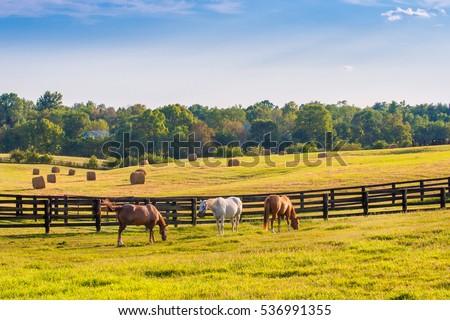 horses grazing on the lawn Stock photo © konturvid