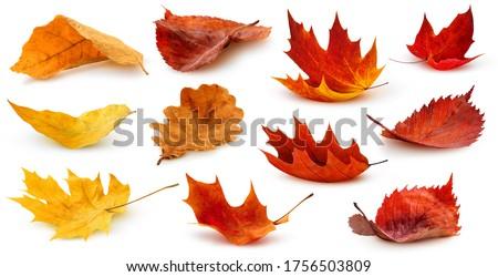 outono · queda · isolado · branco · folha - foto stock © redpixel