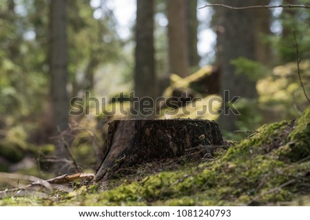 Old stump in forest Stock photo © Kotenko