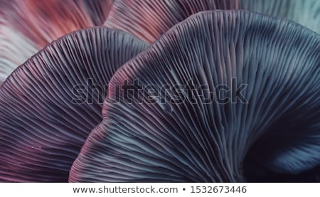Purple mushrooms Stock photo © bluering