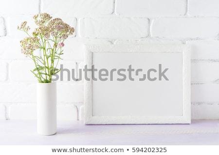 Beyaz çerçeve kremsi pembe çiçekler Stok fotoğraf © TasiPas