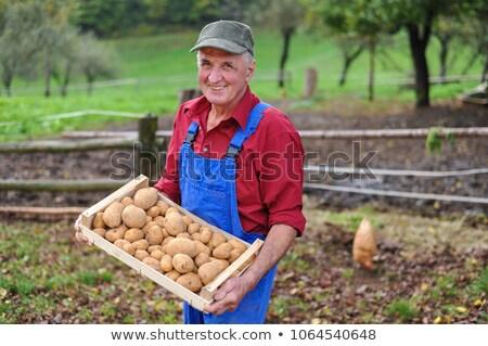 農家 · 納屋 · 空 · 草 · 木材 · 青 - ストックフォト © is2