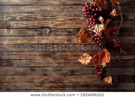 Red autumn berries on a branch on a wooden old fence in the sunl Stock photo © TanaCh