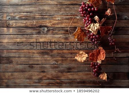 piros · ősz · bogyók · ág · fából · készült · öreg - stock fotó © TanaCh
