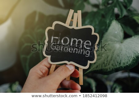 Young woman gardener sitting over flowers plants in greenhouse. Stock photo © deandrobot