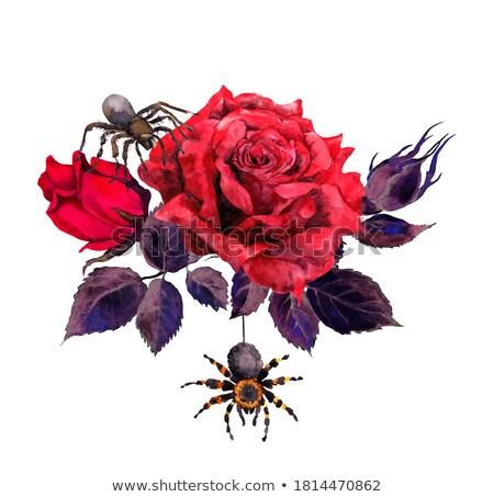 örümcek · çiçek · avcılık · ıslak · yaz · damla - stok fotoğraf © ivz