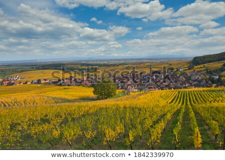 Countryside view Stock photo © HypnoCreative