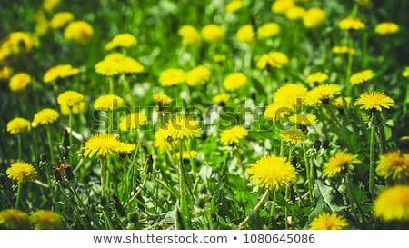flor · asfalto · belo · crescente · rachar · velho - foto stock © stocksnapper
