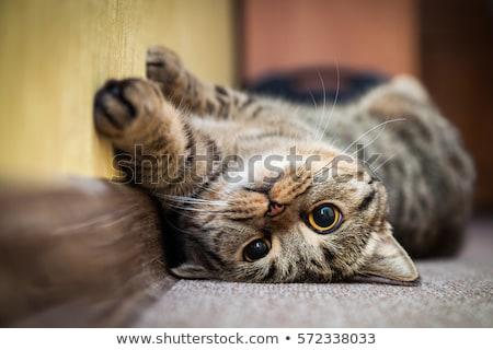 Kat shot natuur oog achtergrond groene Stockfoto © kawing921
