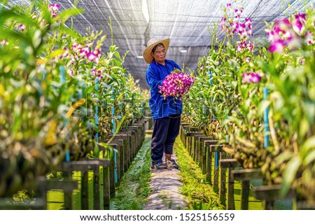 Agriculture orchid farm at thailand stock photo © Bunwit