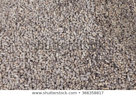 Many freshly-dug peanuts with roots Stock photo © bbbar