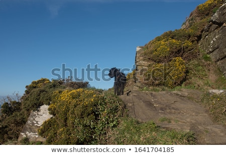 south west coast path near tintagel cornwall stock photo © backyardproductions
