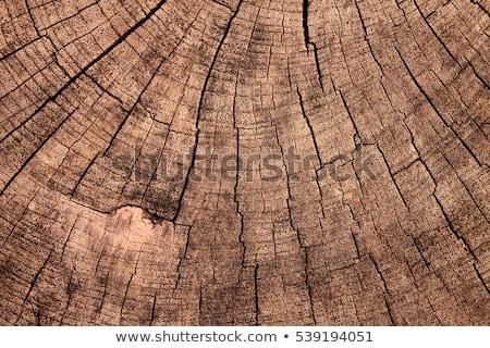 starych · drzewo · wiosną · trawy · lasu · charakter - zdjęcia stock © zhukow