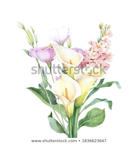 Branco preto praça imagem flor verde Foto stock © Koufax73